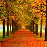 Autumn website